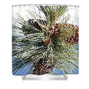 Pine Cones Over Lake Tahoe Shower Curtain