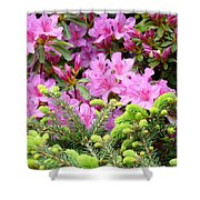 Pine Conifer Pink Azaleas 30 Summer Azalea Flowers Giclee Art Prints Baslee Troutman Shower Curtain