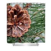 Pine Delight Shower Curtain