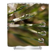 Pine Drops Shower Curtain
