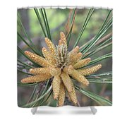 Pine Flower In Summer  Close Up Shower Curtain