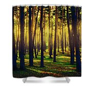 Pine Forest In La Boca Del Asno-segovia-spain Shower Curtain
