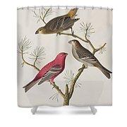 Pine Grosbeak Shower Curtain