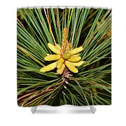 Pine In Bloom Shower Curtain