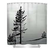 Pine In Snow Shower Curtain