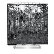 Pine Land In B/w Shower Curtain by Rudy Umans