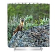 Pine Marten With Attitude Shower Curtain