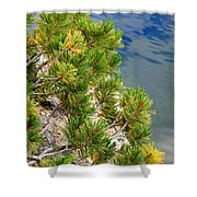 Pine Needles Over Water Shower Curtain