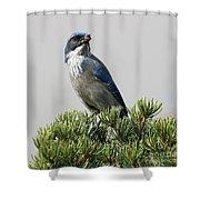 Pine Nut Delight Scrub Jay Shower Curtain
