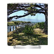 Pine Pilings And Mist Shower Curtain