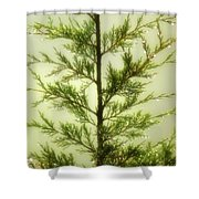 Pine Shower Shower Curtain