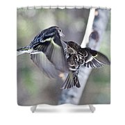 Pine Siskins Fighting 6829 Shower Curtain