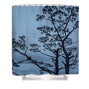 Pine Tree Antigua Guatemala Shower Curtain