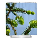 Pine Tree Branches Art Prints Blue Sky Botanical Baslee Troutman Shower Curtain