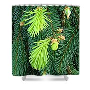 Pine Tree Branches Art Prints Conifer Forest Baslee Troutman Shower Curtain