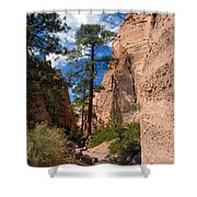 Pine Tree Canyon Shower Curtain