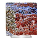 Pine Tree In Bryce Canyon Shower Curtain