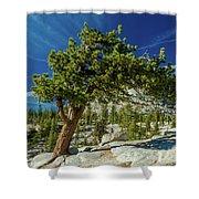 Pine Tree In Yosemite Shower Curtain
