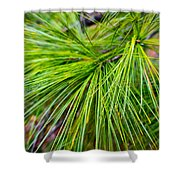 Pine Tree Needles Shower Curtain