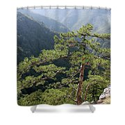 Pine Tree On Mountain Landscape Shower Curtain