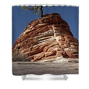 Pine Tree On Sandstone Shower Curtain