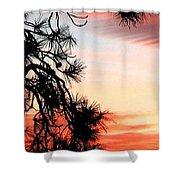 Pine Tree Silhouette Shower Curtain