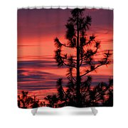 Pine Tree Sunrise Shower Curtain