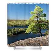 Pine Tree With A View Shower Curtain