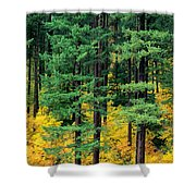 Pine Trees In Autumn Shower Curtain
