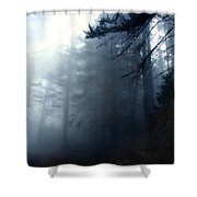 Pine Trees In Fog Shower Curtain