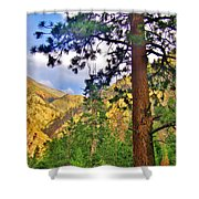 Pine Trees Shower Curtain