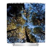 Pine Trees Near Ruidoso Nm Shower Curtain