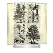 Pine Trees Study Black And White  Shower Curtain