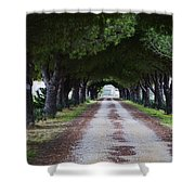 Pine Trees Vendres Shower Curtain
