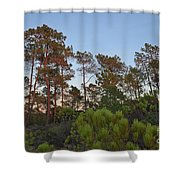 Pine Trees Waiting For Twilight Shower Curtain