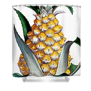 Pineapple, 1789 Shower Curtain