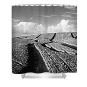 Pineapple Field - Bw Shower Curtain