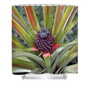 Pineapple, Oahu Shower Curtain