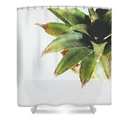 Pineapple Top 2- Art By Linda Woods Shower Curtain