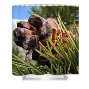 Pinecone With Dripping Sap  Shower Curtain