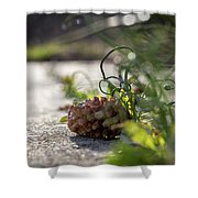 Pinecones And Wild Onions  Shower Curtain