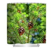 Pinecones Shower Curtain