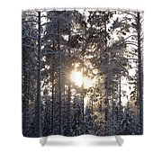 Pines 2 Shower Curtain