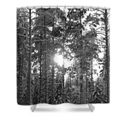 Pines 3 Shower Curtain
