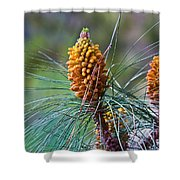 Pines In Bloom Shower Curtain