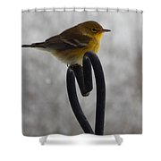 Pining For You Shower Curtain