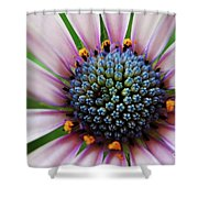 Pink African Daisy Detail Shower Curtain