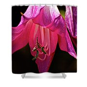 Pink Aglow Shower Curtain