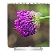 Pink Allium Shower Curtain