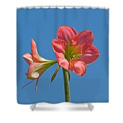 Pink Amaryllis Flowering In Spring Shower Curtain